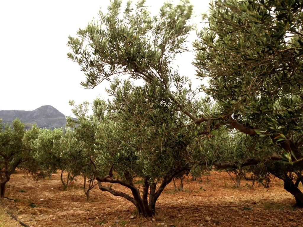 HuileArium.com comence son voyage dans le monde du Huile d'olive