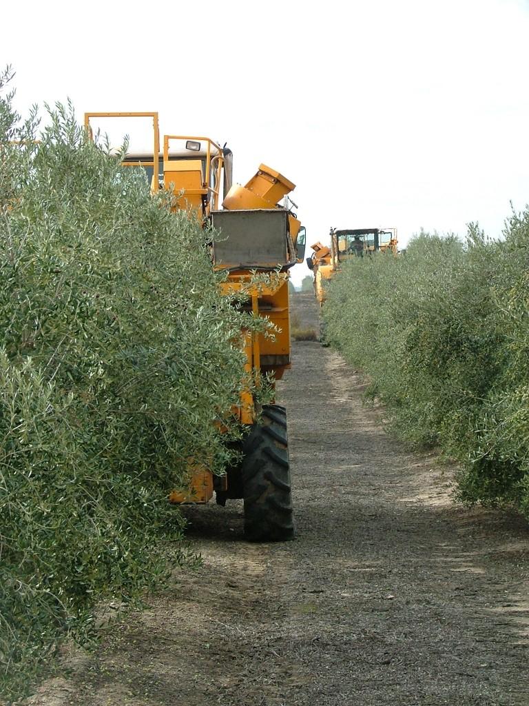 Huile d'Olive des « Monts de Tolède »