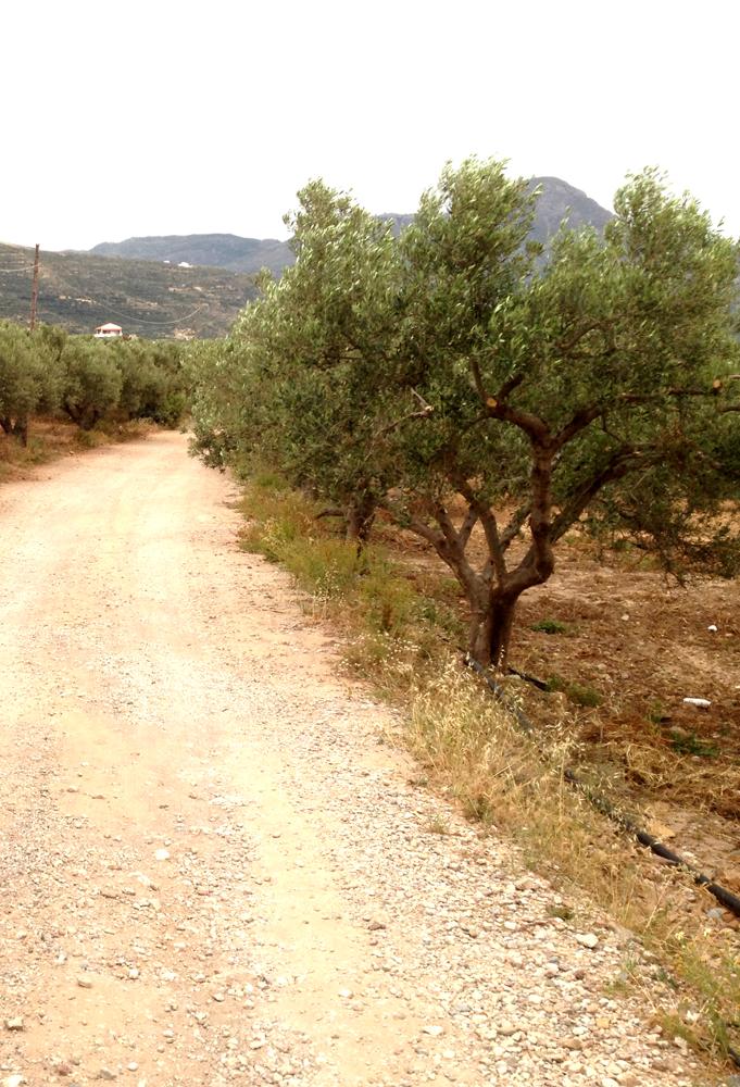 L'huile d'olive en Crète Antique